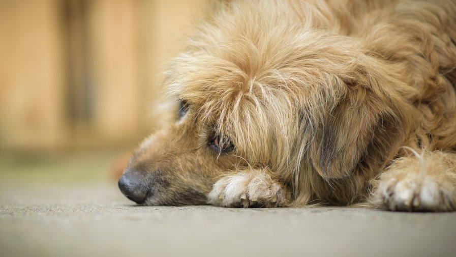 Konsultacje Programu opieki nad zwierzętami bezdomnymi